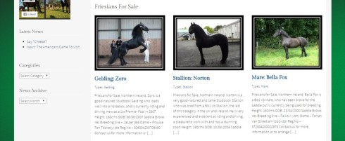 Moonstone Horses Website For Sale
